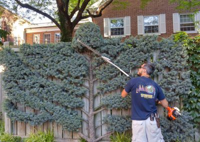 Sculpting Bush with Trimmer