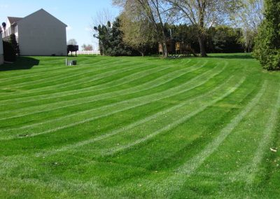 professional striped lawn
